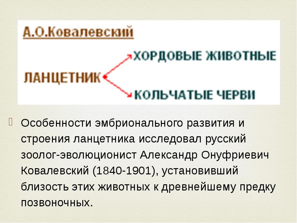 Особенности эмбрионального развития и строения ланцетника исследовал русский...