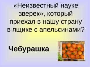 «Неизвестный науке зверек», который приехал в нашу страну в ящике с апельсина