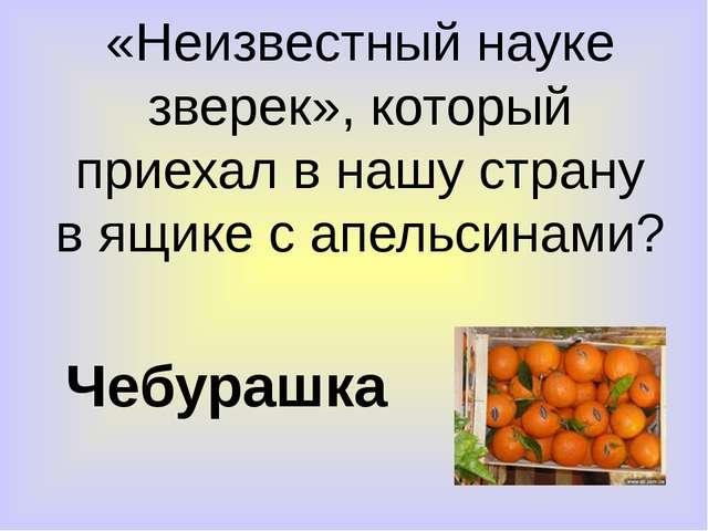 «Неизвестный науке зверек», который приехал в нашу страну в ящике с апельсина...