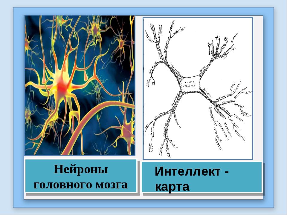 Нейроны головного мозга Интеллект - карта