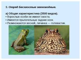 3. Отряд Бесхвостые земноводные.  а) Общая характеристика (3500 видов). • Вз