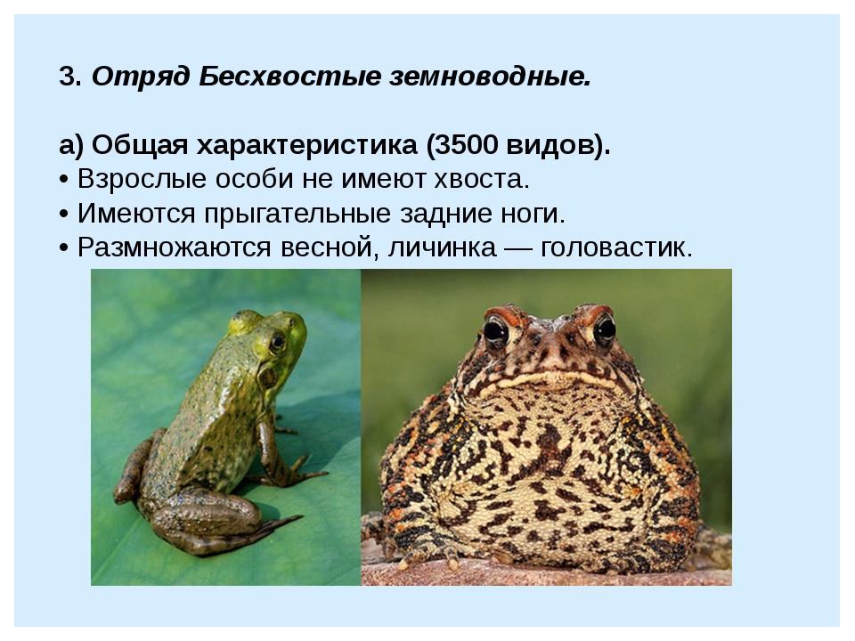 3. Отряд Бесхвостые земноводные.  а) Общая характеристика (3500 видов). • Вз...