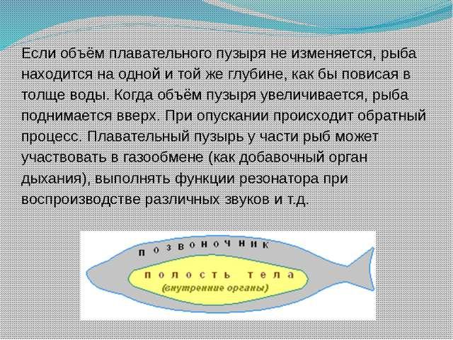 Если объём плавательного пузыря не изменяется, рыба находится на одной и той...
