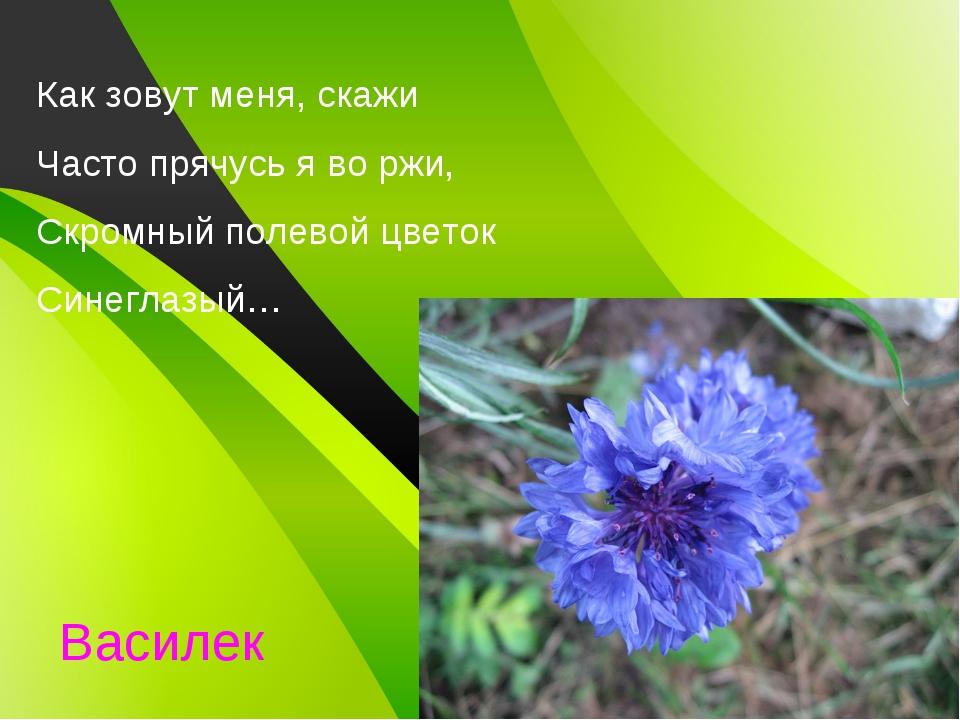 Как зовут меня, скажи Часто прячусь я во ржи, Скромный полевой цветок Синегла...