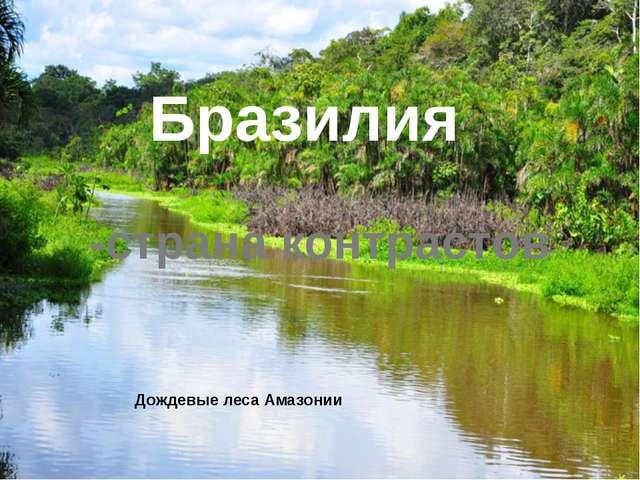 Дождевые леса Амазонии  Бразилия -страна контрастов