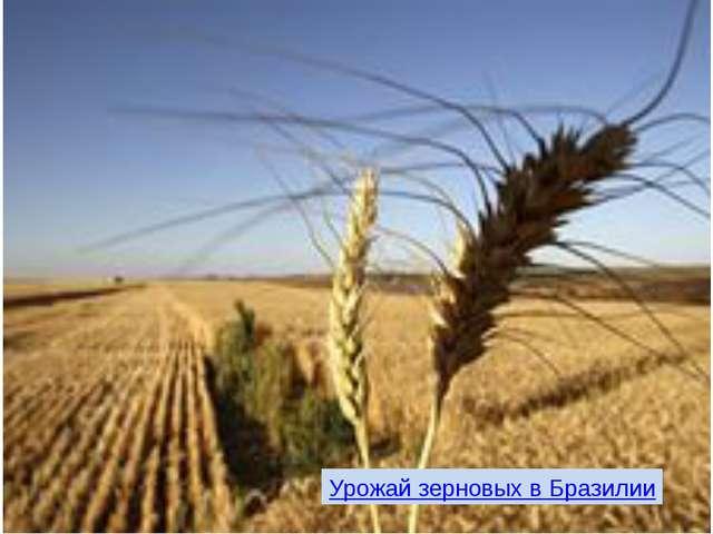 Урожай зерновых в Бразилии