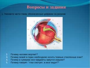 Вопросы и задания 1. Назовите части глаза, обозначенные цифрами на рисунке: