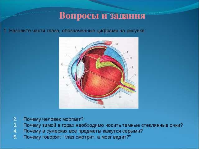 Вопросы и задания 1. Назовите части глаза, обозначенные цифрами на рисунке:...