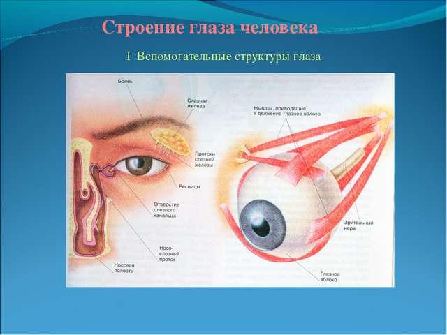 Строение глаза человека I Вспомогательные структуры глаза