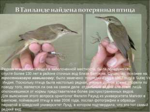 Редкая птица, обитающая в заболоченной местности, была обнаружена спустя боле