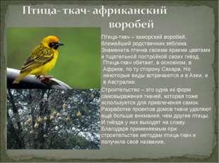Птица-ткач – заморский воробей, ближайший родственник зяблика. Знаменита птич