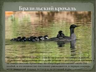 Место обитания этих птиц из семейства утиных, питающихся рыбой, ограничено не