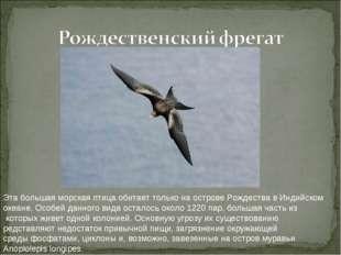 Эта большая морская птица обитает только на острове Рождества в Индийском ок