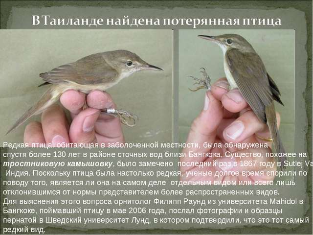 Редкая птица, обитающая в заболоченной местности, была обнаружена спустя боле...