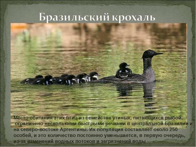 Место обитания этих птиц из семейства утиных, питающихся рыбой, ограничено не...