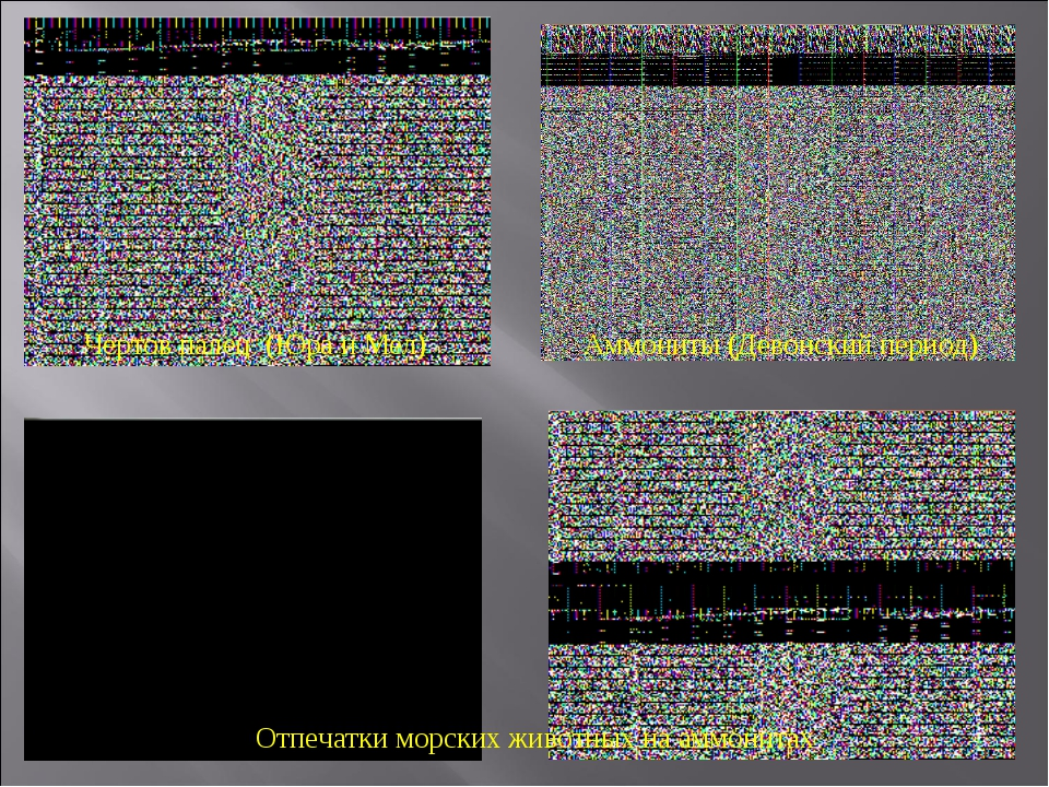 Чертов палец (Юра и Мел) Аммониты (Девонский период) Отпечатки морских животн...