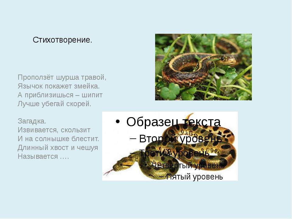 Стихотворение. Проползёт шурша травой, Язычок покажет змейка. А приблизишься...