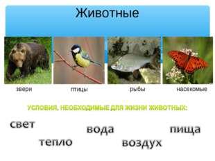 Животные звери птицы рыбы насекомые