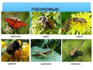 Насекомые. шмели бабочки жуки пчёлы кузнечики стрекозы