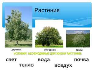 Растения деревья кустарники травы