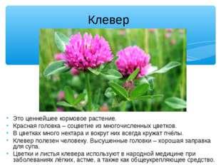 Клевер Это ценнейшее кормовое растение. Красная головка – соцветие из многоч