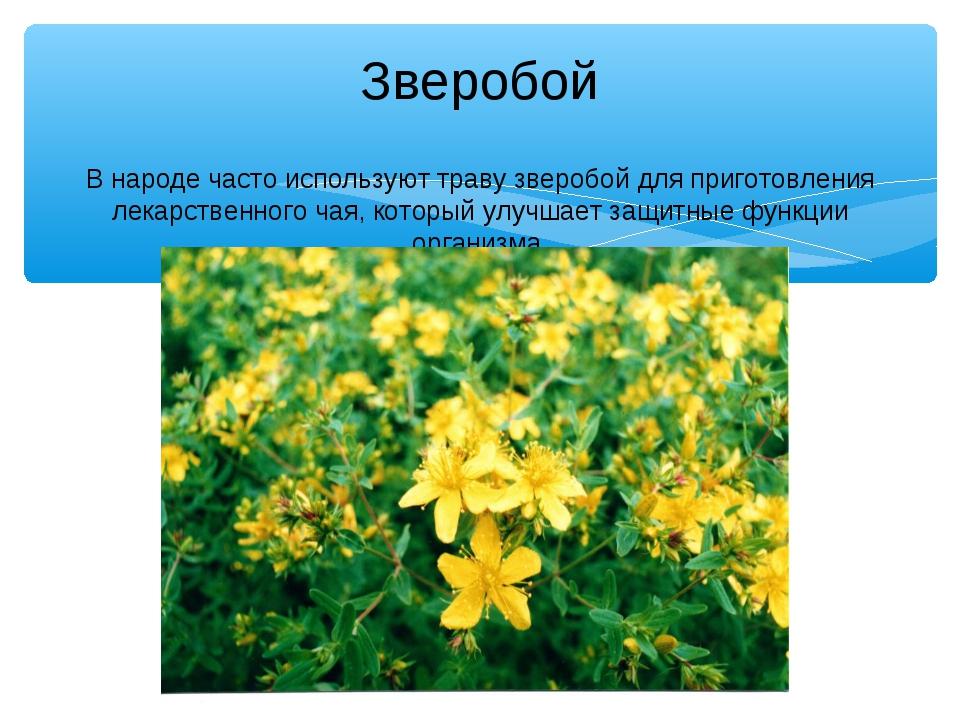 Зверобой В народе часто используют траву зверобой для приготовления лекарстве...