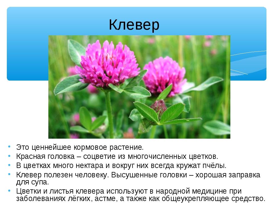 Клевер Это ценнейшее кормовое растение. Красная головка – соцветие из многоч...