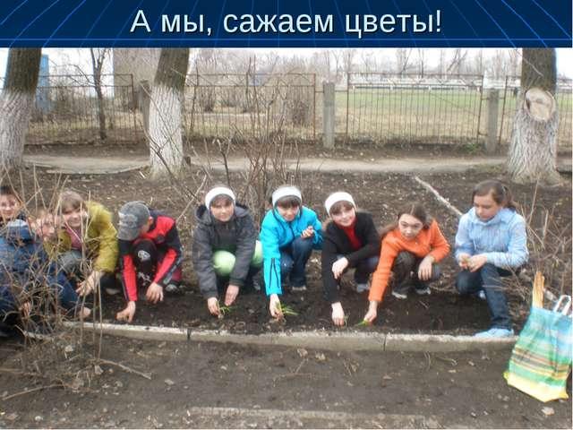 А мы, сажаем цветы!