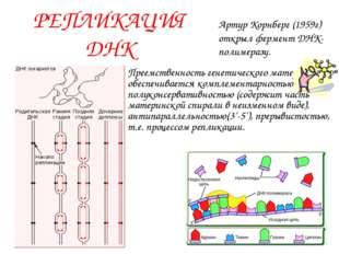 РЕПЛИКАЦИЯ ДНК Преемственность генетического материала обеспечивается комплем