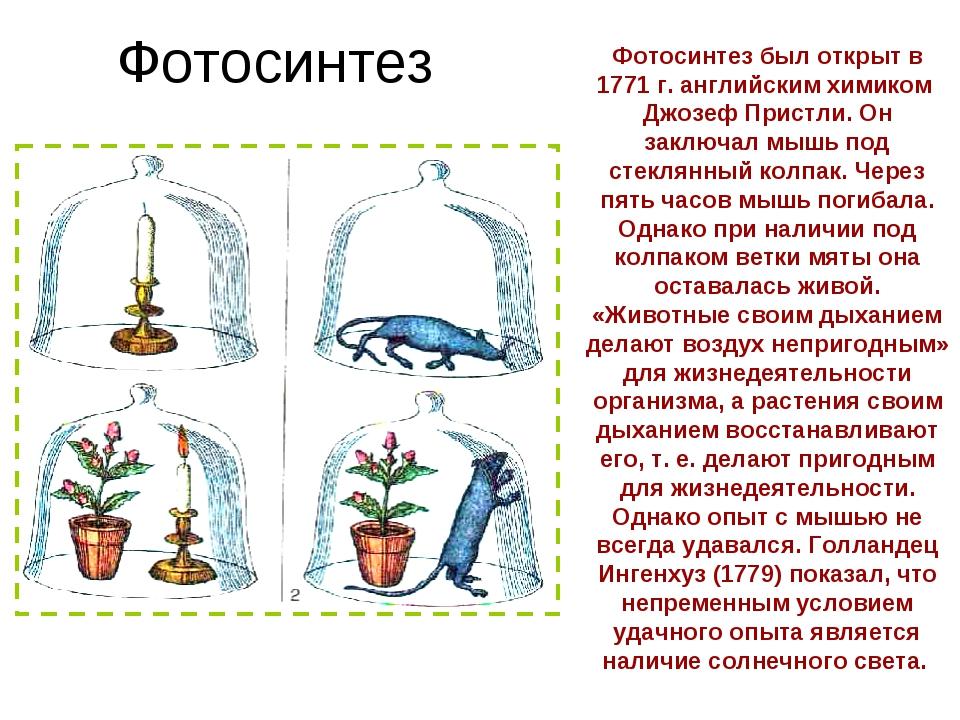 Фотосинтез Фотосинтез был открыт в 1771 г. английским химиком Джозеф Пристли....