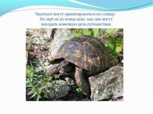 Черепахи могут ориентироваться по солнцу. Но ещё не до конца ясно как они мог