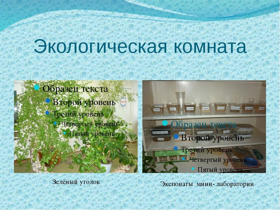 Экологическая комната Зелёный уголок Экспонаты мини- лаборатории