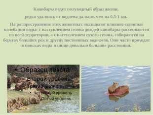 Капибары ведут полуводный образ жизни, редко удаляясь от водоема дальше, чем