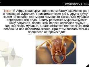 Текст. В Африке хирурги народности банту зашивают раны с помощью муравьев. Пр