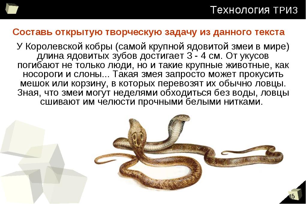 У Королевской кобры (самой крупной ядовитой змеи в мире) длина ядовитых зубов...