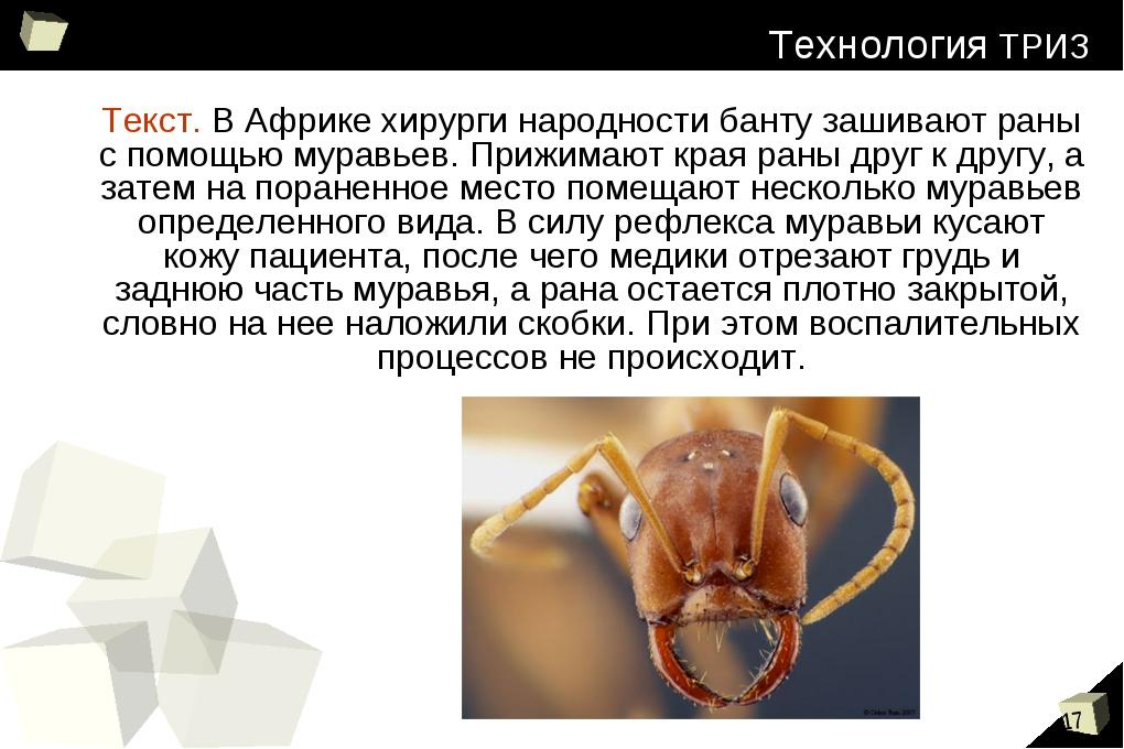 Текст. В Африке хирурги народности банту зашивают раны с помощью муравьев. Пр...