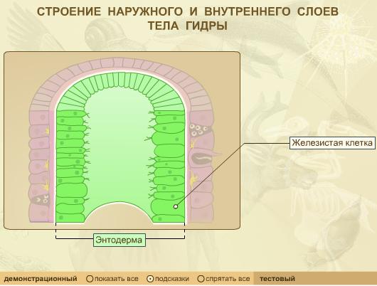http://files.school-collection.edu.ru/dlrstore/cfeceb3a-fb70-4bc1-b941-cd58cf4978dc/Files/13.jpg