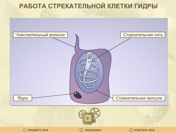 http://files.school-collection.edu.ru/dlrstore/cfeceb3a-fb70-4bc1-b941-cd58cf4978dc/Files/17.jpg