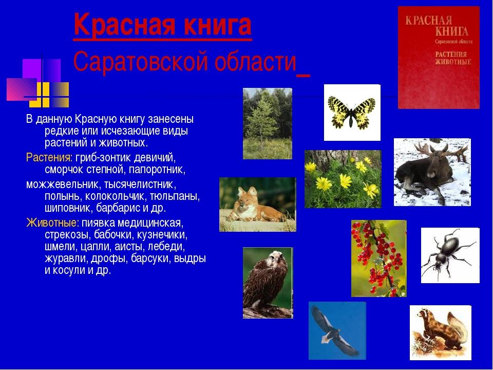 Красная книга Саратовской области В данную Красную книгу занесены редкие или...
