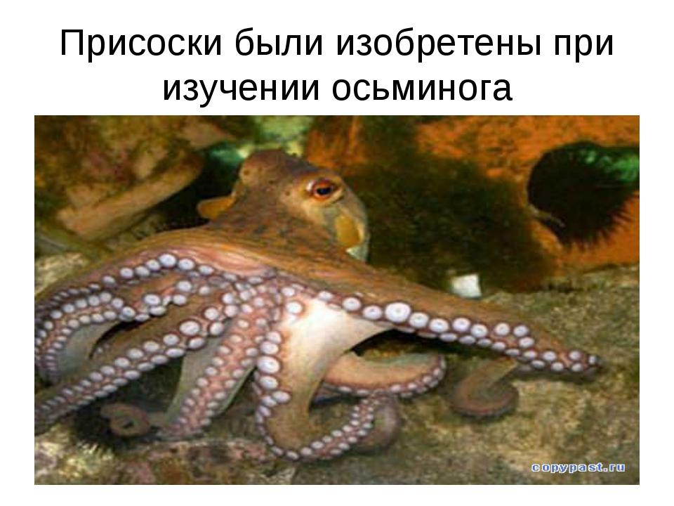 Присоски были изобретены при изучении осьминога