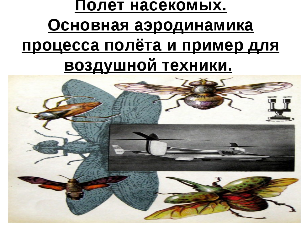 Полёт насекомых. Основная аэродинамика процесса полёта и пример для воздушной...