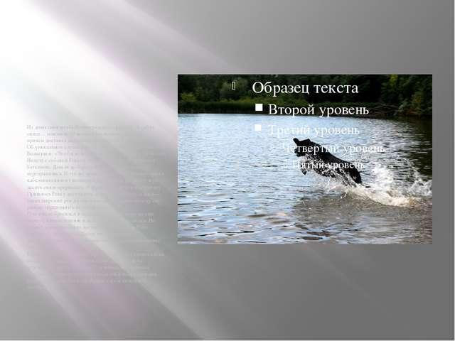 Из донесения штаба Ленинградского фронта: «6 собак связи… заменили 10 человек...