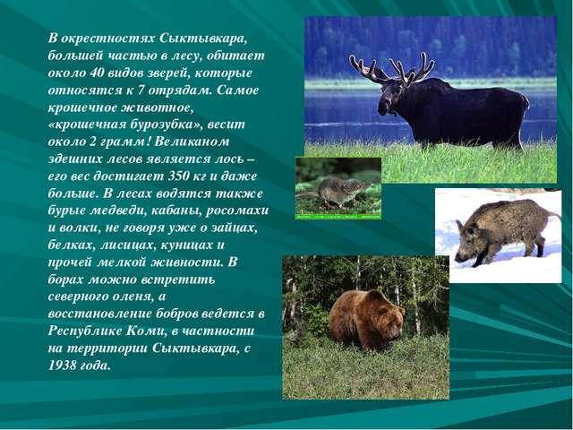 В окрестностях Сыктывкара, большей частью в лесу, обитает около 40 видов звер...