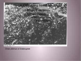 Очки убитых в Освенциме