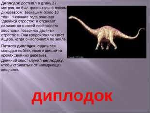 Диплодок достигал в длину 27 метров, но был сравнительно легким динозавром, в