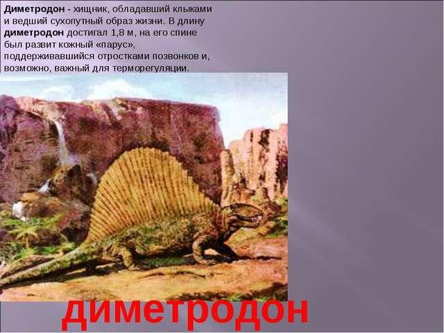 Диметродон - хищник, обладавший клыками и ведший сухопутный образ жизни. В дл...