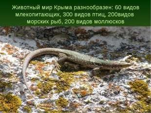 Животный мир Крыма разнообразен: 60 видов млекопитающих, 300 видов птиц, 200в