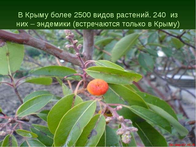 В Крыму более 2500 видов растений. 240 из них – эндемики (встречаются только...