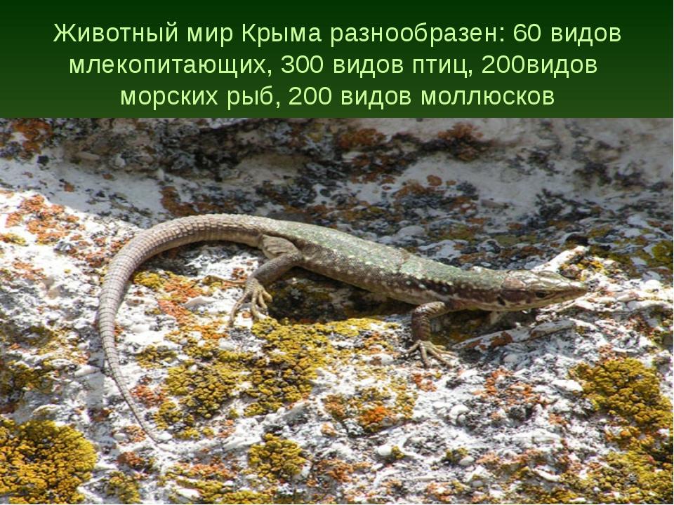 Животный мир Крыма разнообразен: 60 видов млекопитающих, 300 видов птиц, 200в...
