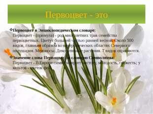 Первоцвет - это Первоцвет в Энциклопедическом словаре: Первоцвет - (примула)